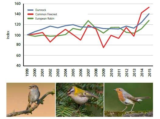 Dağbülbülü, Sürmeli çalıkuşu ve kızılgerdanların popülasyonu üst üste ılıman geçen iki kışın ardından en yüksek sayıya ulaştı.